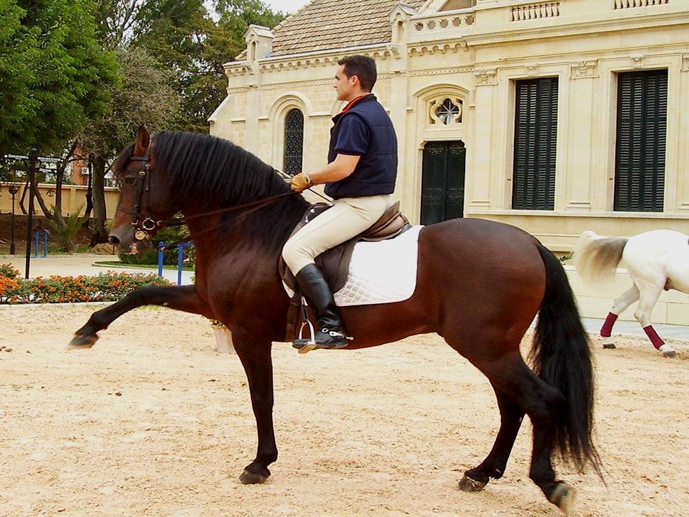 02-rc-caballo-indiv-2-2