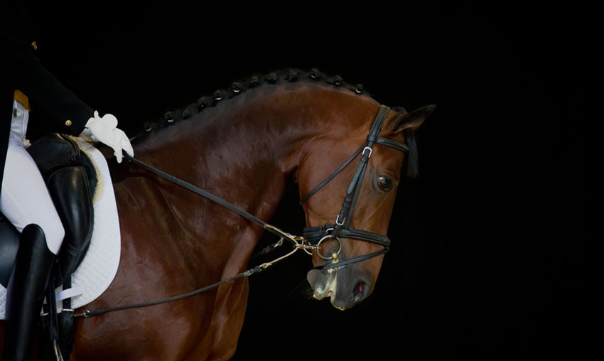 Seguros para centros equestres